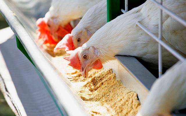 animal industry feed ingredients